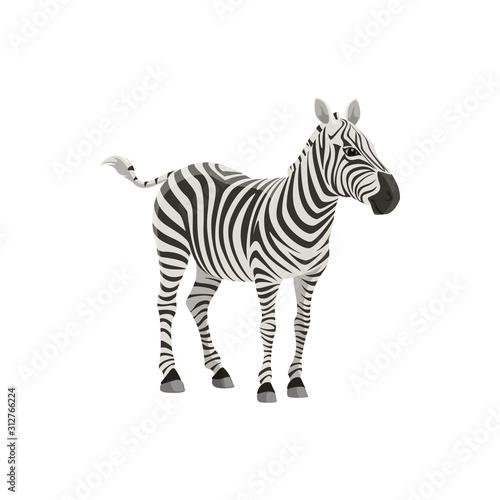 Zebra wild animal vector isolated icon. African safari zoo and savanna hunt trophy zebra - 312766224