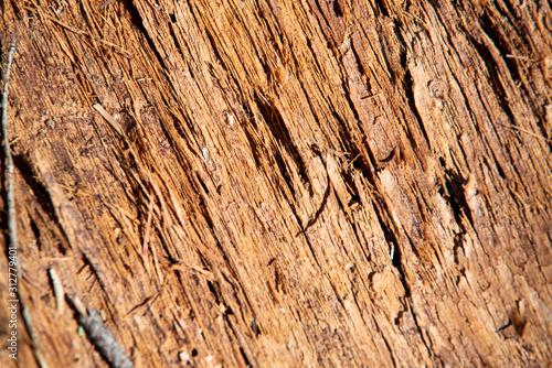 Fotografie, Obraz 避けた木の表面