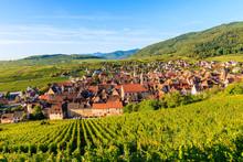 View Of Vineyards In Riquewihr...
