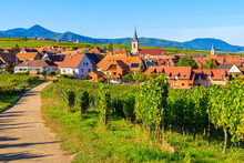 Grapes In Vineyards And View Of Church In Beblenheim Village, Alsace Wine Route, France