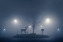 Deer In The Night
