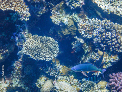 Fototapety, obrazy: underwater view of red sea