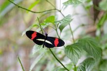 Black Butterfly Spreads Wings On Flower