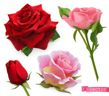 Red And Pink Roses. 3d Realistic Vector Set