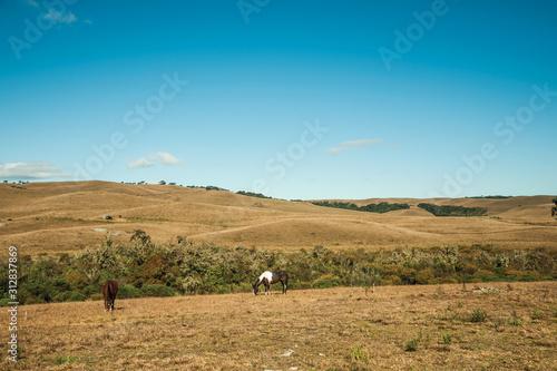 Fotomural Horses grazing on landscape of rural lowlands