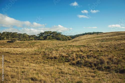 Cuadros en Lienzo Landscape of rural lowlands called Pampas