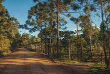 Dirt Road With Wooden Farm Gate And Trees