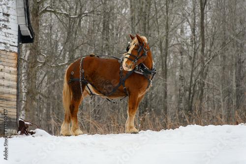 Valokuva horse in winter