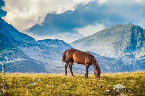 Wild horse roaming free on an alpine pasture in the summer
