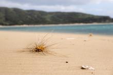 Grass Seed On Windswept Beach