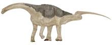 サルタサウルス 南米(アルゼンチン)の白亜紀後期の地層から発見された中型の恐竜。竜脚類としては中型の草食恐竜。背中に装甲をもつティタノサウルスの仲間。皮膚の印象化石では細かい骨質の粒が皮膚を装甲化し、その中に大小の骨板が散らばっている防御装甲を持っている。全長は12メートル。