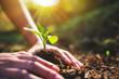 Leinwandbild Motiv Closeup image of people preparing to grow a small tree with soil in the garden