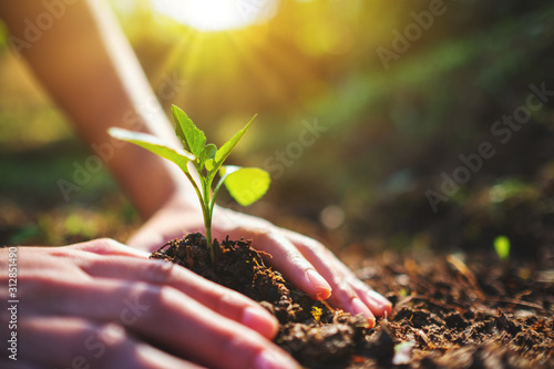 Closeup image of people preparing to grow a small tree with soil in the garden