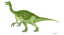 アラシャサウルス想像図 白亜紀前期の中国の内モンゴルから発見された。化石は頭部が欠落していたが、骨格の特殊性と近似性からテジリノサウルス類に分類される。イラストのように足の幅が広く湿地を歩くのに適しており、前脚に伸びた巨大な爪は湿地の地中の生物の捕食や植物の摂取に使用されたものだと考えられる。後肢は太く重心が低いのも不安定な湿地での活動に役立っていたと思われる。