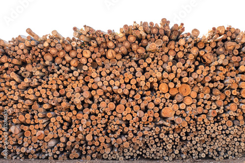 Fotografija  Eucalyptus wood or wood log for construction buildings background and texture