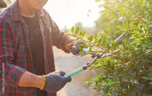 People cutting a hedge in the garden Canvas Print