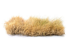 Dry Brown Garden Grass Studio ...