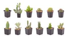 Set Of Mini Cactus In Black Plastic Planting Pot Isolated On White