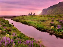 A Beautiful Landscape In Vik, Iceland With Summer Flowers In Bloom And A Pink Sky Reflected In A Stream Flowing To The Sea With Pinnacle Rocks Visible.