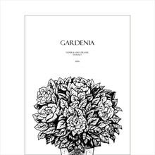 Hand Drawn Gardenia Flowers In...