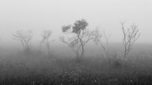 Black And White Photo Of Bushe...