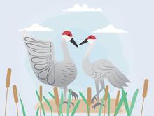 Vector Image Of Couple Sandhill Crane For Valentine's Day.