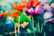 canvas print picture - Fleurs colorées