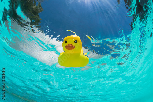 Leinwand Poster Floating rubber duck in the swimmingpool