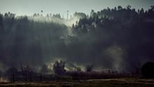 Morning Mist, Trees And Sunshine