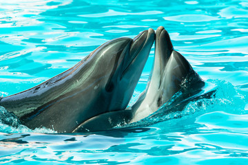 dolphins swim and jump in the water