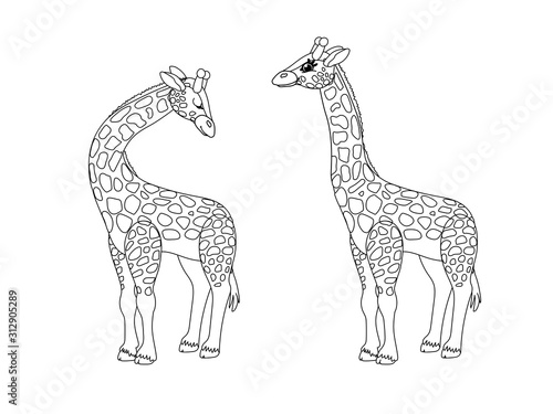 Photo  vector line cartoon animal clip art