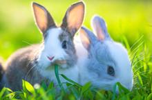 Cute Little Bunnies On The Grass