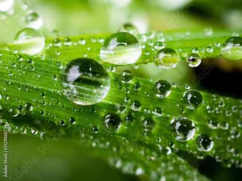 goccioline d'acqua, brina brezza mattutina su erba e prato Fototapeta