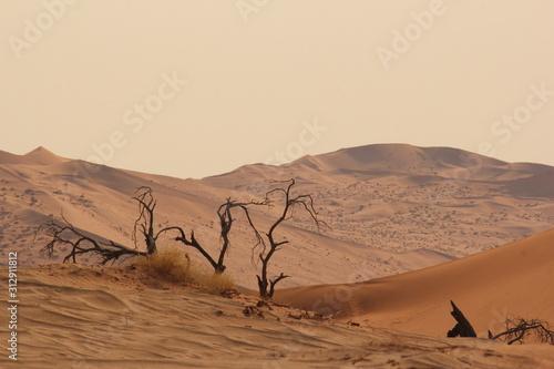 Wüste Wallpaper Mural