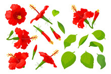 Vector Hand Drawn Plant Clipart