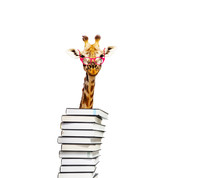 Smart Funny Giraffe Look From Behind Pile Of Books
