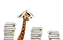 Funny Giraffe With Piles And B...
