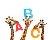 Three Giraffes Learning Alphab...