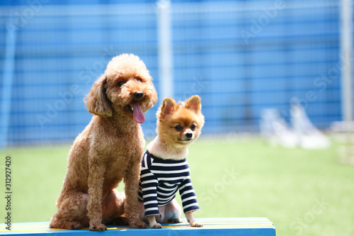 Happy puppies in a private playground Canvas Print