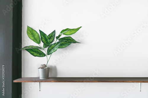 Cuadros en Lienzo  Wooden shelf on white wall with green plant.