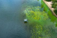 Blooming Blue-green Algae. Wat...