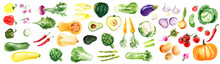 Watercolor Vegetables On A Whi...