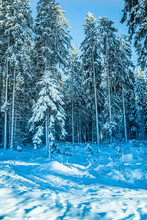 The Bohemian Forest, Known In ...