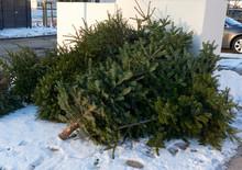 Christmas Tree End Of Life Garbage