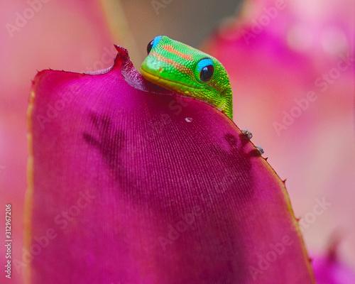 Gold Dust Day Gecko Fototapet
