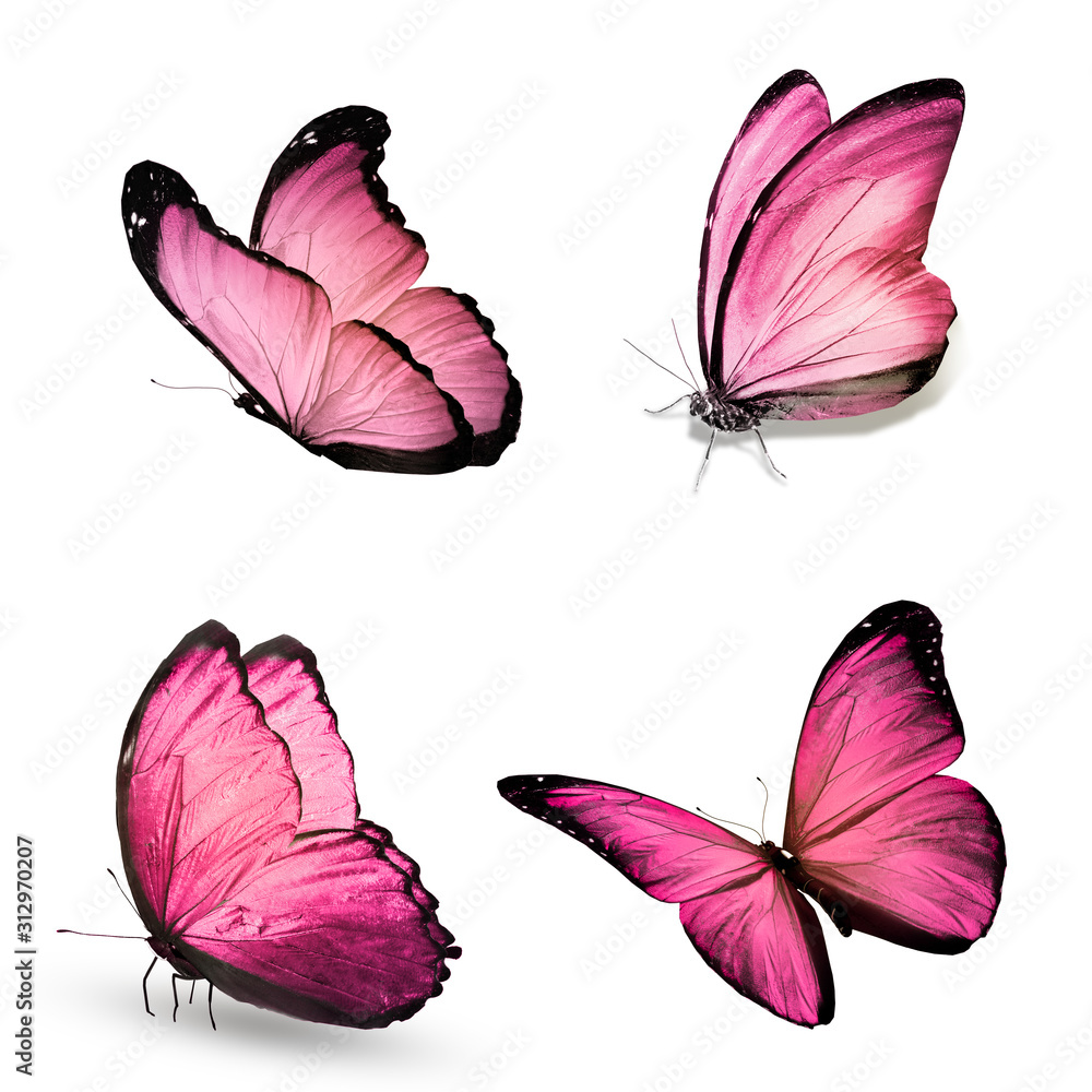 Fototapeta Color butterflies , isolated on white background