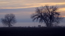 Scenic Sunrise With Silhouette Of Big Old Barren Trees During Winter In Farm Landscape, Time Lapse