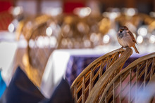 Sparrow Perched On A Chair