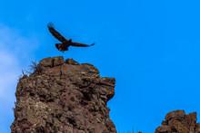 Golden Eagle Soars Over Cliff