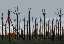 Deer Standing Among Burned Tre...